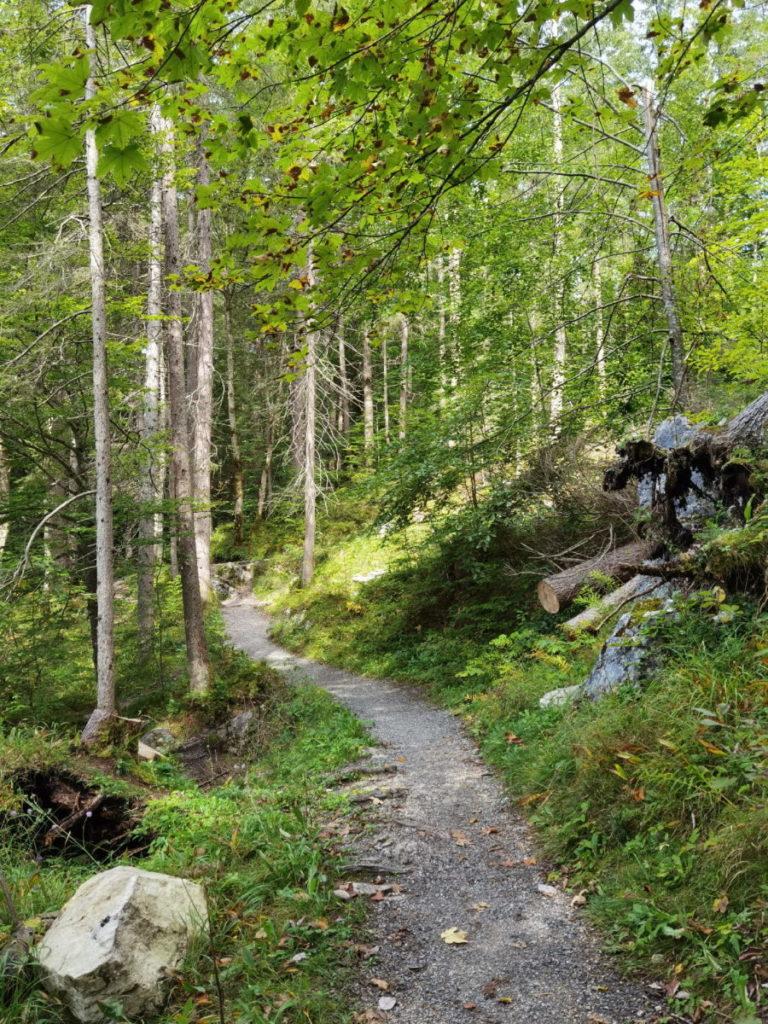 Durch den Wald zum Badersee wandern